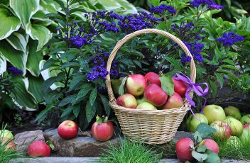 Apples_Wicker_basket_Foliage_525970_2560x1440